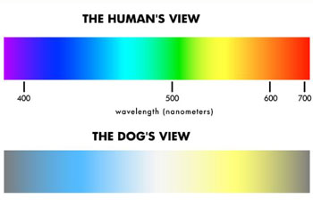Dog Vision Colourchat